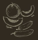 Vector hand drawing juicy melons Royalty Free Stock Images