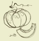 Vector hand drawing juicy melons Stock Images