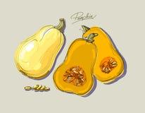 Vector hand drawing juicy melons Stock Photo