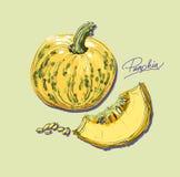 Vector hand drawing juicy melons Royalty Free Stock Photo