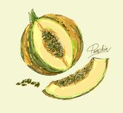 Vector hand drawing juicy melons Stock Image