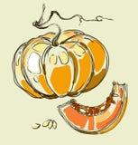 Vector hand drawing juicy melons Royalty Free Stock Image