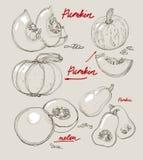 Vector hand drawing juicy melons Stock Photos