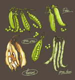 Vector hand drawing  legumes on a dark background Royalty Free Stock Images
