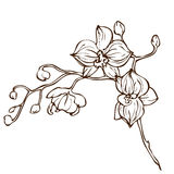 Vector hand drawing orchid flower Royalty Free Stock Photos