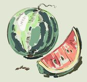 Vector hand drawing realistic watermelon Royalty Free Stock Photos