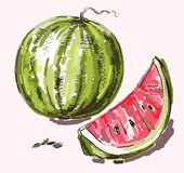 Vector hand drawing realistic watermelon Royalty Free Stock Photography