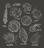 Vector hand drawing set of cabbage Royalty Free Stock Photos