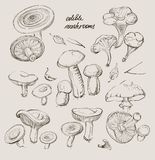 Vector hand drawing a set of mushrooms Stock Image