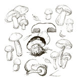 Vector hand drawing a set of mushrooms Stock Images