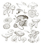 Vector hand drawing a set of mushrooms. Stock Photo