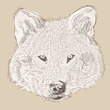 Vector hand drawing wolf head Stock Images