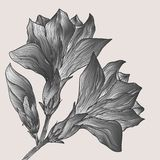 Vector hand drawn abstract flower in vintage style Stock Photography