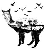 Vector Hand drawn alpaca for your design Royalty Free Stock Images