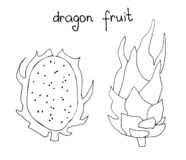 Vector hand drawn art of tropical dragon fruit. Summer print in doodle style stock illustration