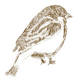 Vector hand drawn bird Royalty Free Stock Images