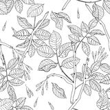 Vector hand drawn black and white floral seamless pattern of ash Stock Image