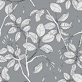 Vector hand drawn black and white floral seamless pattern of ash Stock Photography