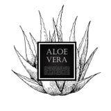 Vector hand drawn botanical Aloe Vera. Royalty Free Stock Photography