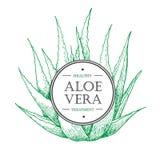 Vector hand drawn botanical Aloe Vera. Stock Image