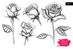 Vector hand drawn botanical rose set. Engraved collection Royalty Free Stock Photos