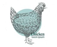 Vector hand drawn chicken illustration. Retro engraving style. Sketch farm animal drawing. Hen logo template. Stock Photography