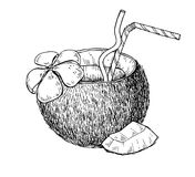 Vector hand drawn coconut drink. Tropical summer fruit engraved Royalty Free Stock Image