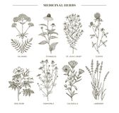 Medicinal herbs. Vector hand drawn collection of medicinal, cosmetics herbs. St. John`s Wort echinacea lavender valerian chamomile calendula dog-rose clover Royalty Free Stock Images