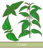 Vector hand drawn colored illustration of nettle Royalty Free Stock Photography