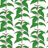 Vector hand drawn colored nettle background Royalty Free Stock Photography