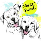 Vector hand drawn concept of labradoe retriever and pitbull terrier frienship. Best friends. Royalty Free Stock Image