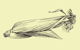 Vector hand drawn corn cob illustration. Royalty Free Stock Photo