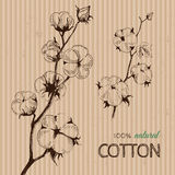 Vector hand drawn cotton plants on cardboard. Vector hand drawn stems of cotton plants on cardboard. Perfect design for natural market advertising, organic vector illustration