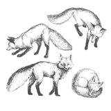 Vector hand drawn cute animal set. Sketch illustration  Stock Images