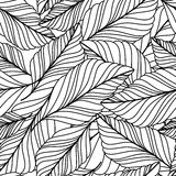 Vector hand drawn doodle leaves seamless pattern. Abstract autumn. Black and white background. Nature organic line illustration Royalty Free Stock Image