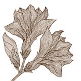 Vector hand drawn elegant flower in vintage style Stock Images