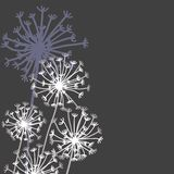 Vector hand drawn elements in strict floral style. Vector hand drawn design elements in strict floral style - blowball and fennel Royalty Free Stock Photos