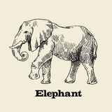 Vector hand drawn elephant. Beautiful vector hand drawn elephant for your design Royalty Free Stock Photo