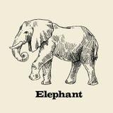 Vector hand drawn elephant Royalty Free Stock Photo
