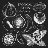 Vector hand drawn exotic fruits. Chalkboard style engraved smoothie bowl ingredients. Tropical sweet food delivery Royalty Free Stock Images