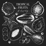 Vector hand drawn exotic fruits. Chalkboard style engraved smoothie bowl ingredients. Tropical sweet food delivery Royalty Free Stock Photography