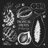 Vector hand drawn exotic fruits. Chalkboard style engraved smoothie bowl ingredients. Tropical sweet food delivery Stock Photography