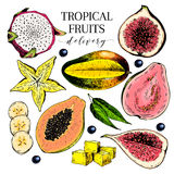 Vector hand drawn exotic fruits. Engraved smoothie bowl ingredients. Colored icon set. Tropical sweet food. Carambola. Fig, mango, pitaya, banana, acai, guava Stock Photos