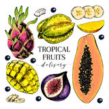 Vector hand drawn exotic fruits. Engraved smoothie bowl ingredients. Colored icon set. Tropical sweet food. Carambola. Fig, mango, pitaya, banana, acai Stock Photography