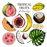 Vector hand drawn exotic fruits. Engraved smoothie bowl ingredients. Colored icon set. Tropical sweet food. Carambola Stock Image