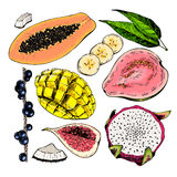 Vector hand drawn exotic fruits. Engraved smoothie bowl ingredients. Colored icon set. Tropical sweet food. Fig, mango. Pitaya, banana, acai, guava, coconut Stock Photo