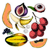 Vector hand drawn exotic fruits. Engraved smoothie bowl ingredients. Colored icon set. Tropical sweet food. Lychee, fig. Mango, pitaya, banana, acai. Use for Royalty Free Stock Photography