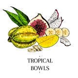 Vector hand drawn exotic fruits. Engraved smoothie bowl ingredients. colored icons. Tropical sweet food. Carambola, fig. Mango, pitahaya, banana, coconut. Use Stock Images