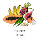 Vector hand drawn exotic fruits. Engraved smoothie bowl ingredients. colored icons. Tropical sweet food.Papaya, banana Royalty Free Stock Photography
