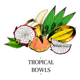 Vector hand drawn exotic fruits. Engraved smoothie bowl ingredients. colored icons. Tropical sweet food. Piatahaya Stock Photography